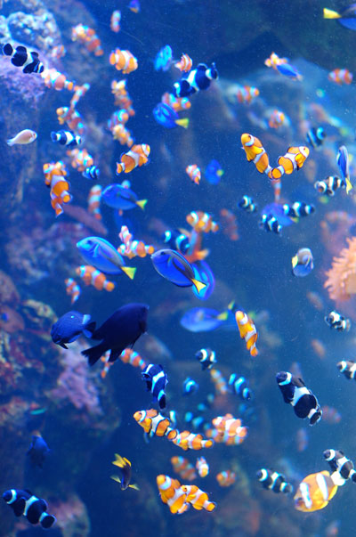 Discount coupons for aquarium of the pacific long beach